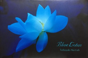 blue lotus1