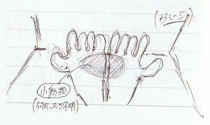 手の中の動物