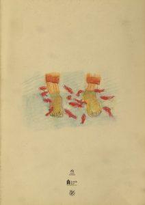 運動靴と赤い金魚2